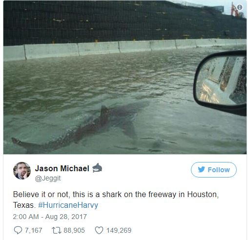 SHARK! SHARK! Er, not really.